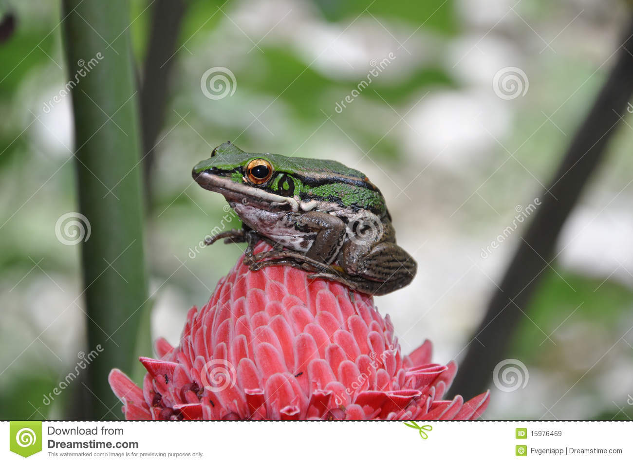 Frog sitting on a Pink Flower