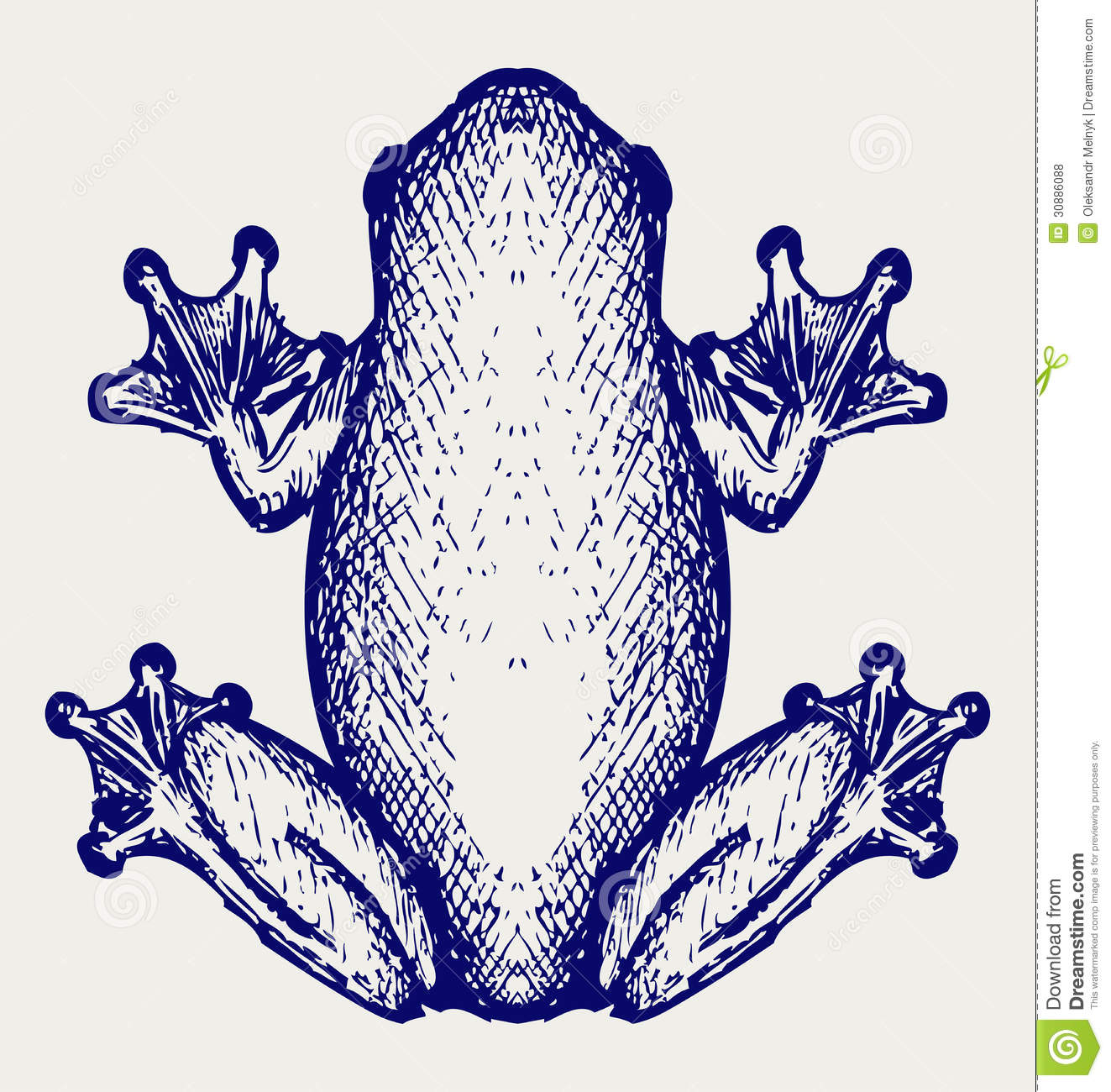 Download Frog sketch stock vector. Illustration of draw, freehand - 30886088