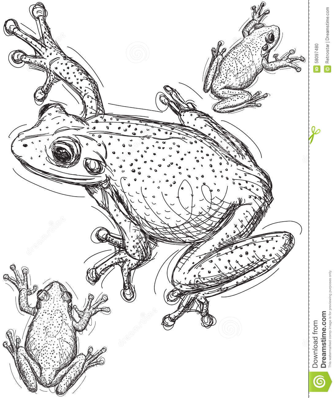 Line Drawing Frog : Frog sketches stock vector image