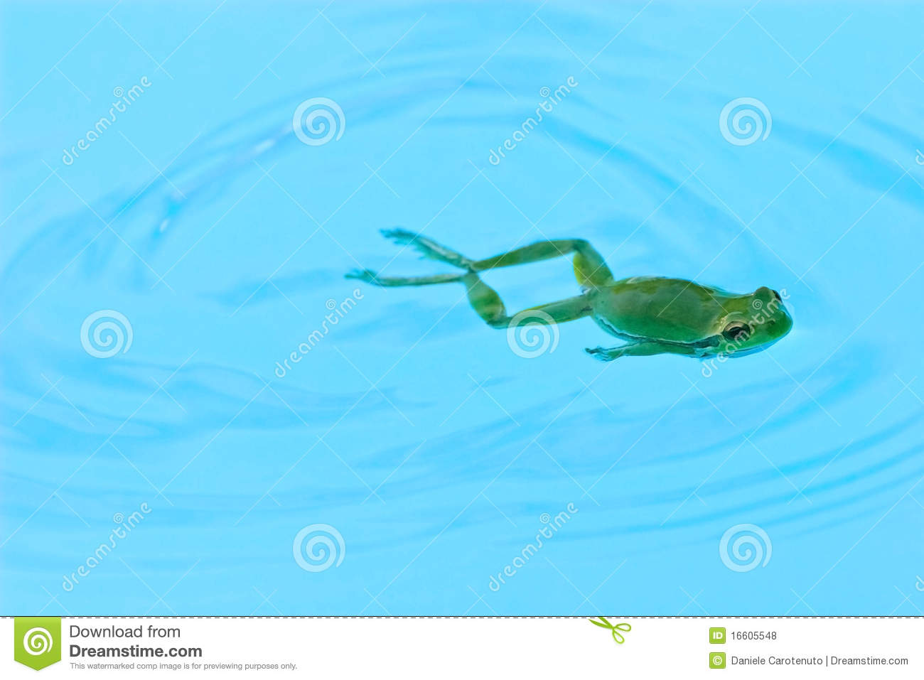 Frog Swimming Royalty Free Stock Photos Image 16605548