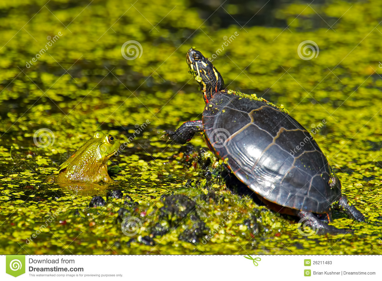 frog and turtle stock photos image 26211483 frog and toad are friends clipart frog and toad clipart