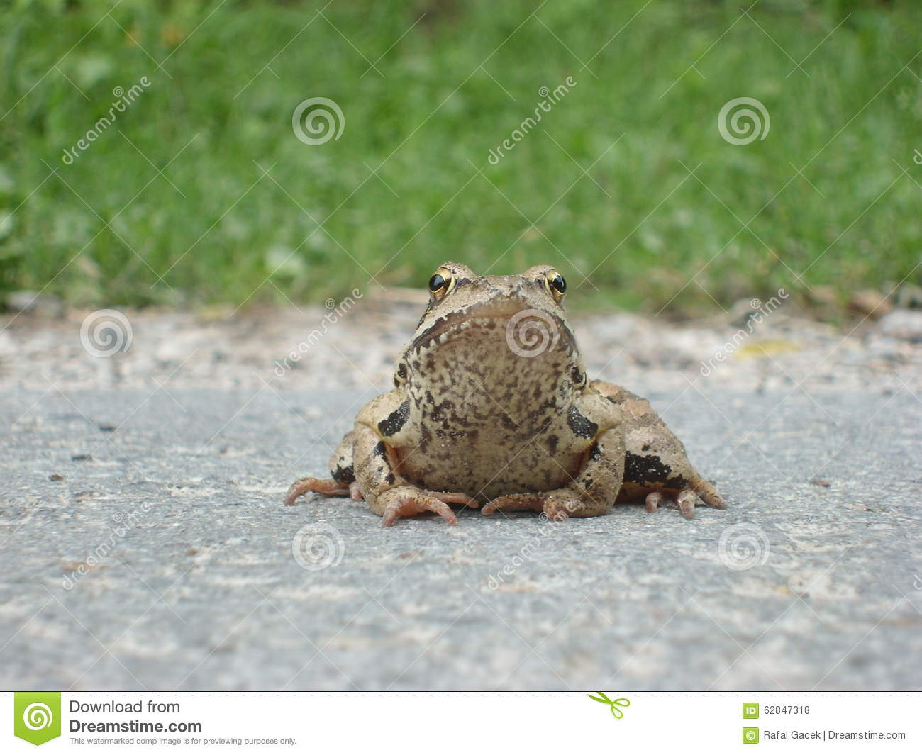 Download Frog on the way stock photo. Image of frogs, composing - 62847318