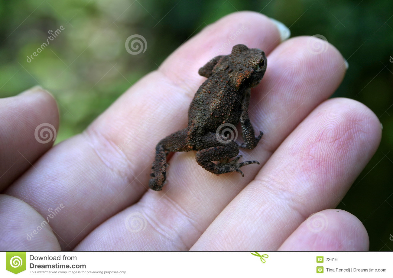 Froggy λίγα