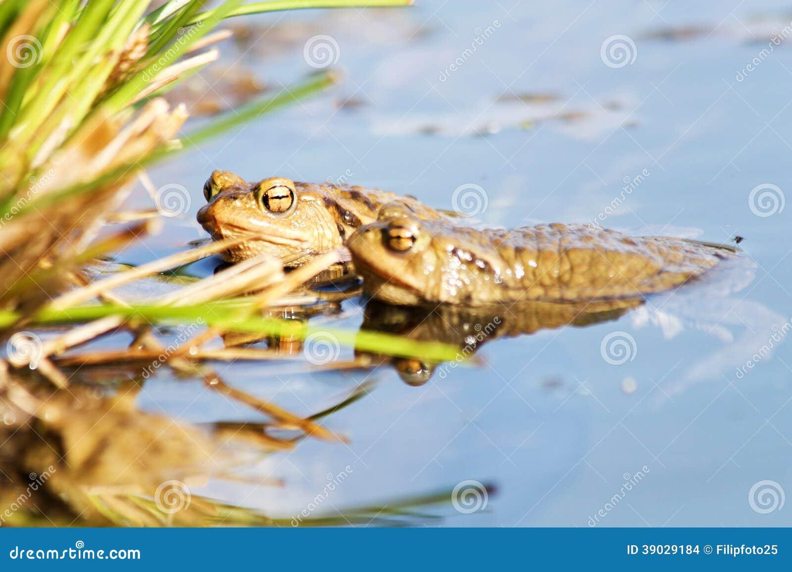 Froggy Rohr - ficken sexy streifen und porno: -