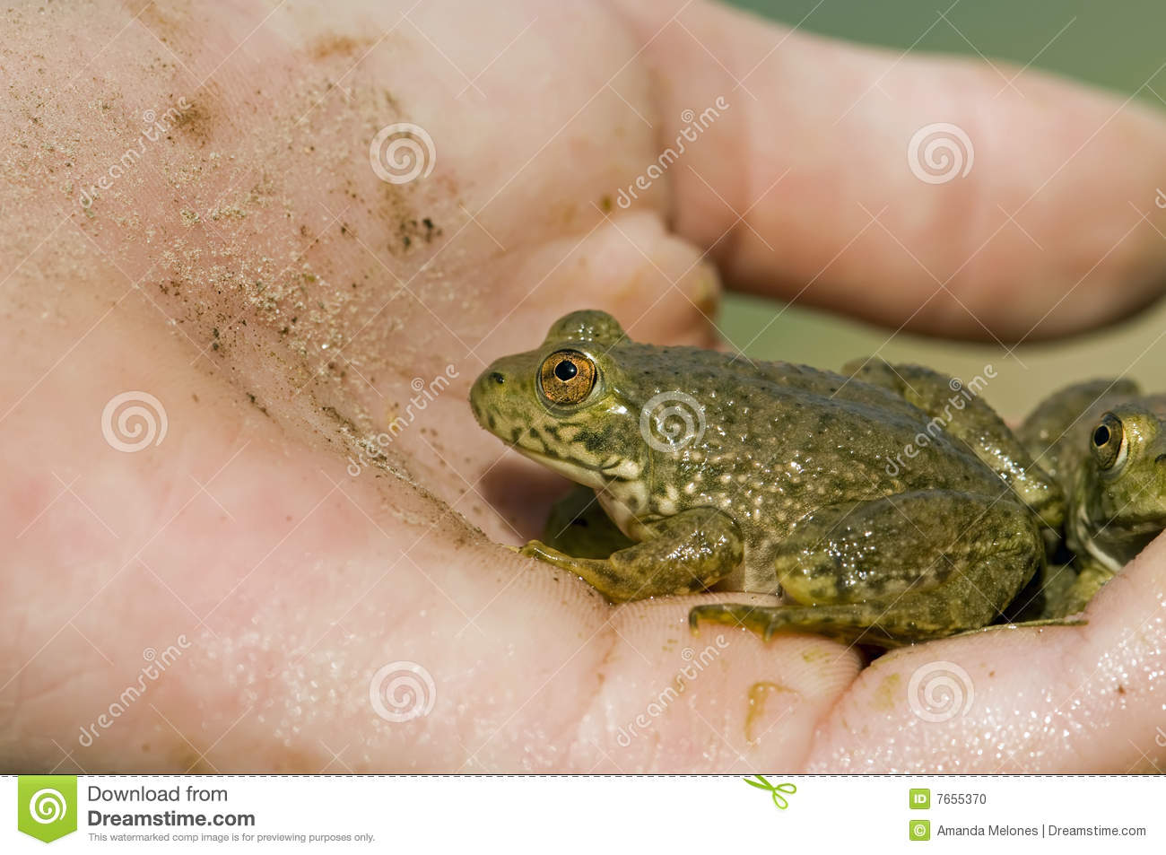 Frogs in hand
