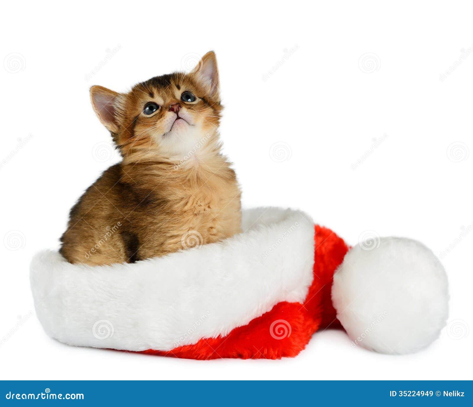 Website Design Cats