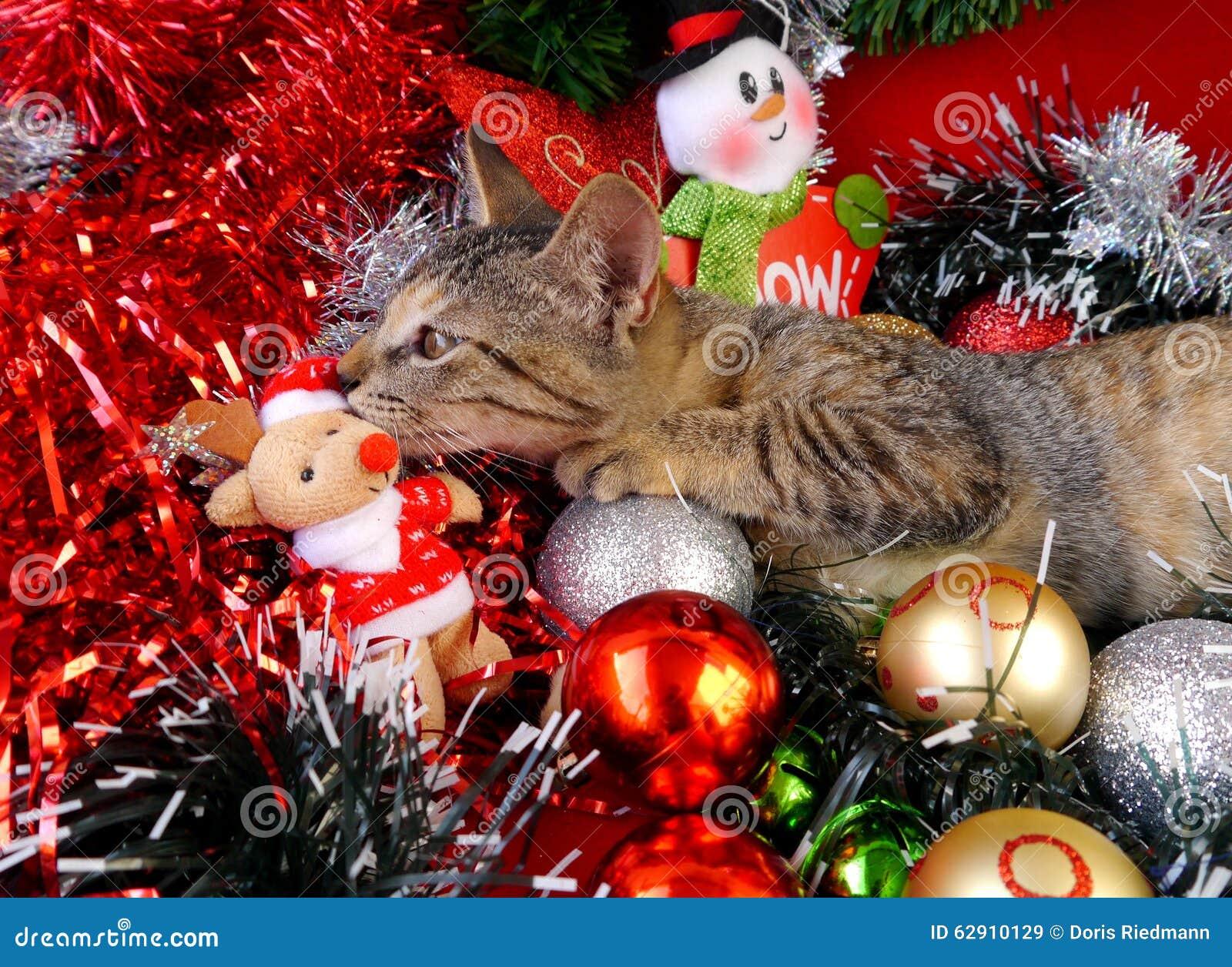 Frohe Weihnachten Katze.Frohe Weihnachten Und Ein Guten Rutsch Ins Neue Jahr Kardiert Katzen