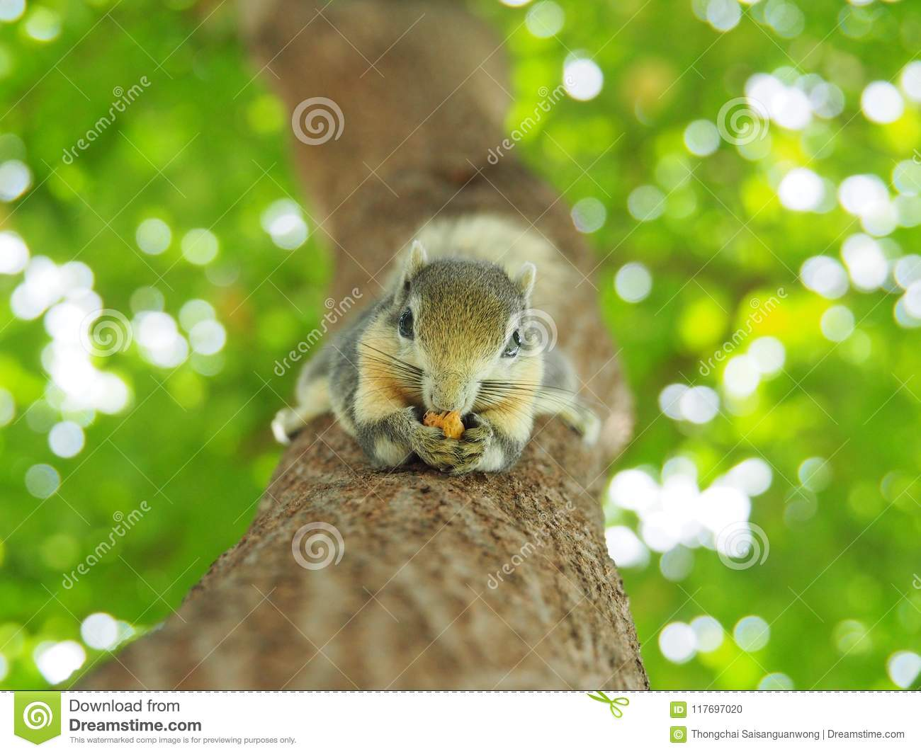 surprising Small Cute Smart Part - 8: Front face of a squirrel on a tree eating beans. It`s small and cute,  nimble and smart.