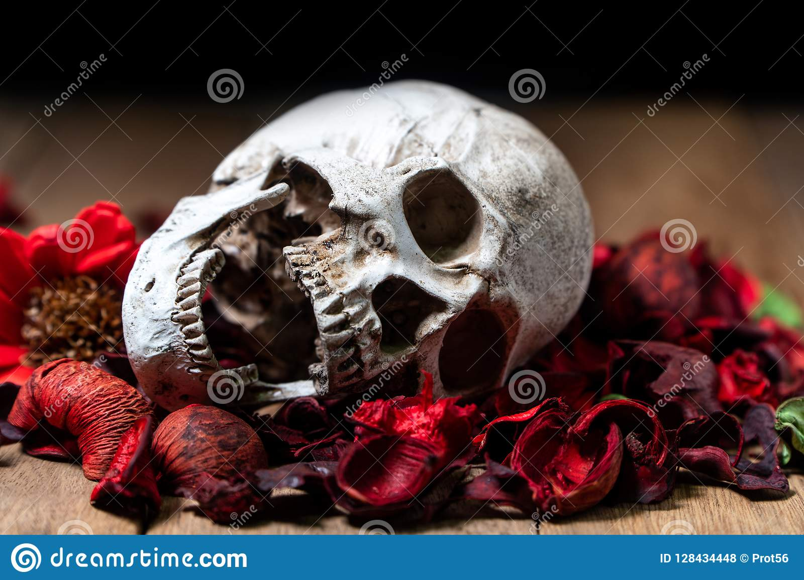 In front of human skull placed on red dried flowers on the wooden background.concept of death and Halloween.