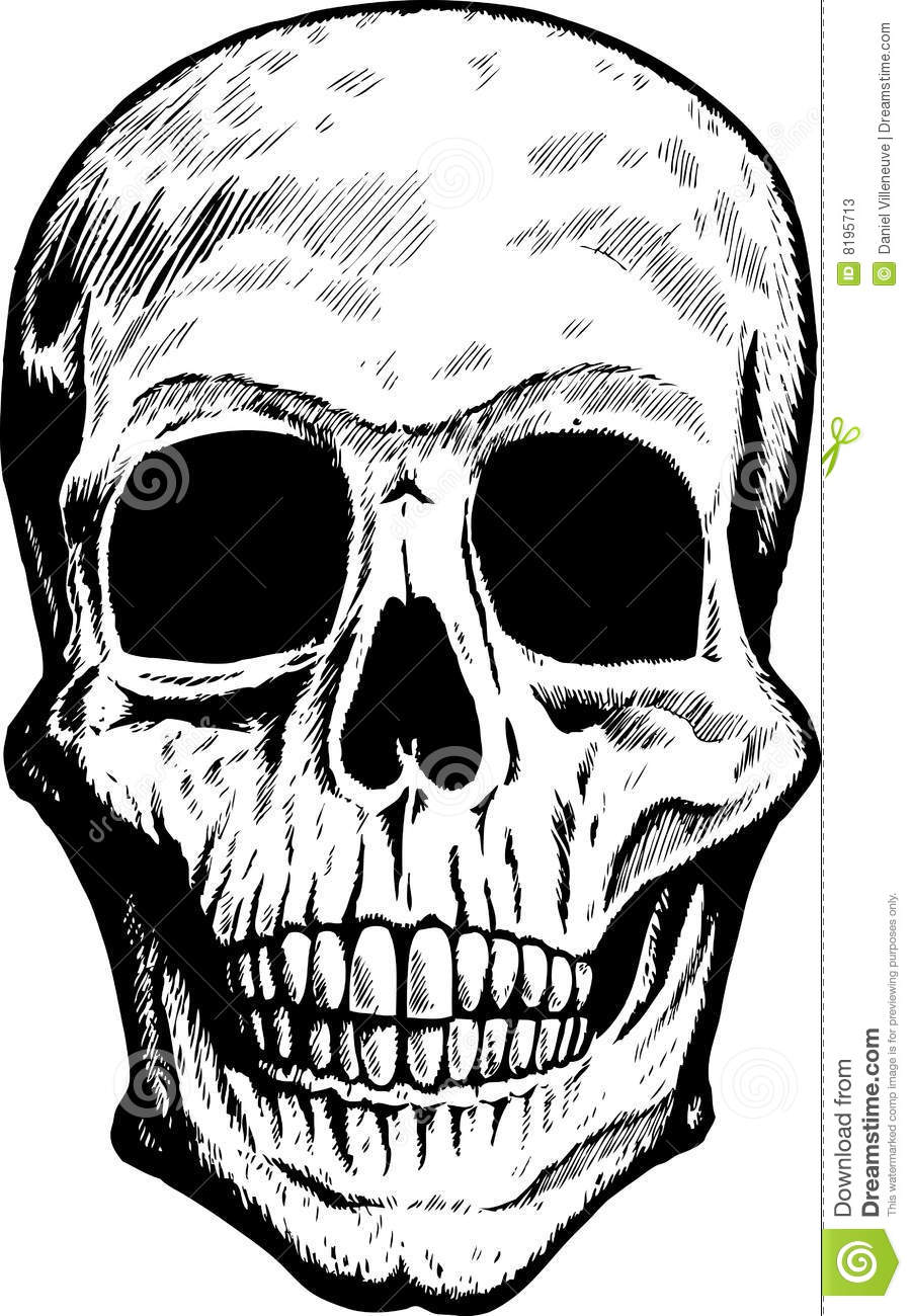 Front Skull Stock Photos Image 8195713