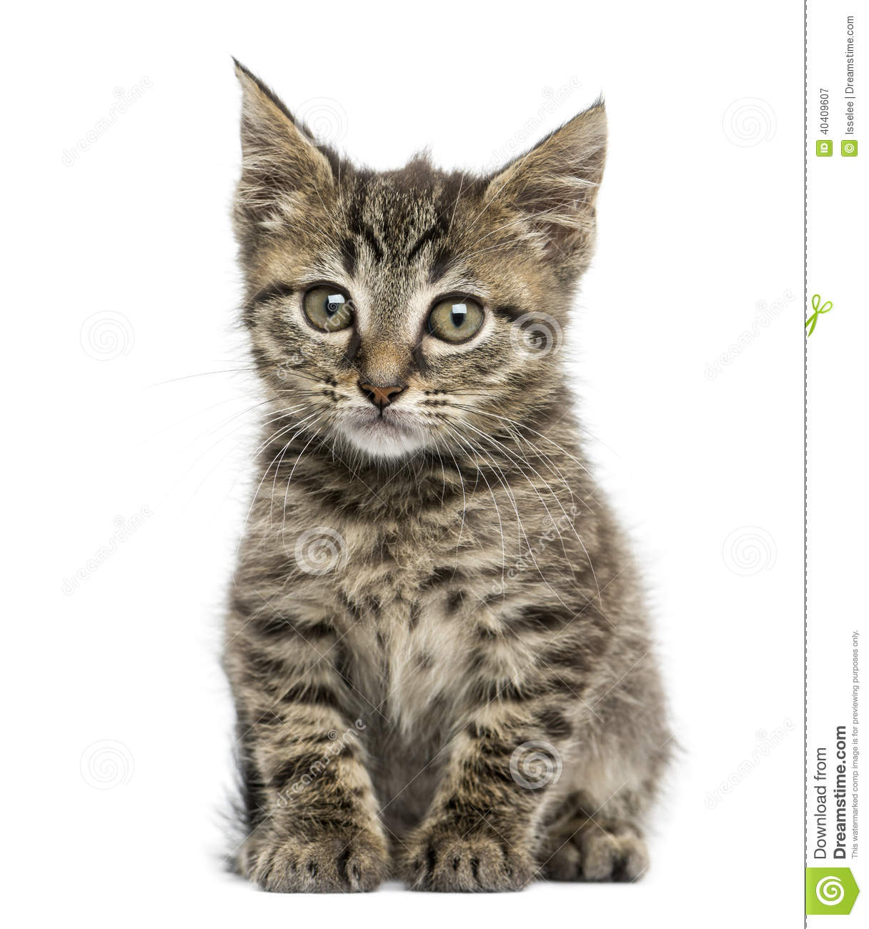 Good Names For Tabby Cats