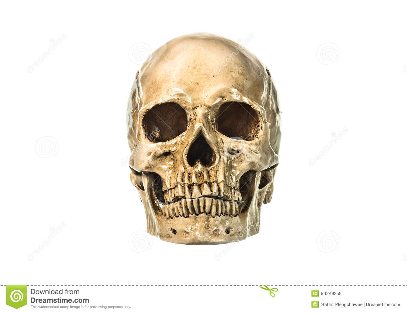 Front view of human skul stock image Image of gloom