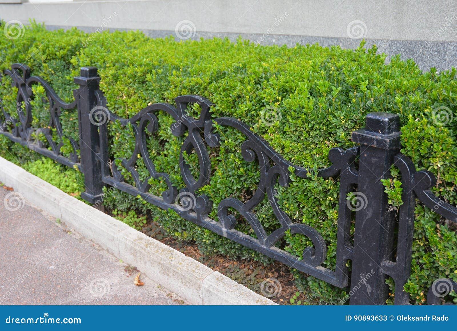 Front Yard Landscape Design mit Buchsbaum-Hecken Buchsbaum-Hecke mit kleinem Metallzaun Lebender Zaun