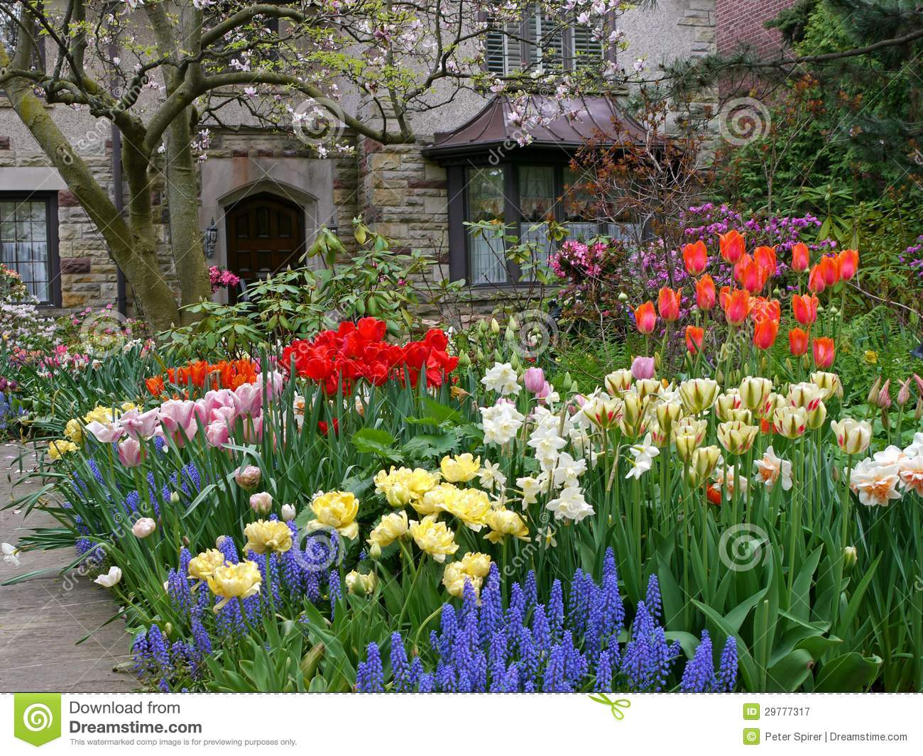 front yard with spring flowers stock image
