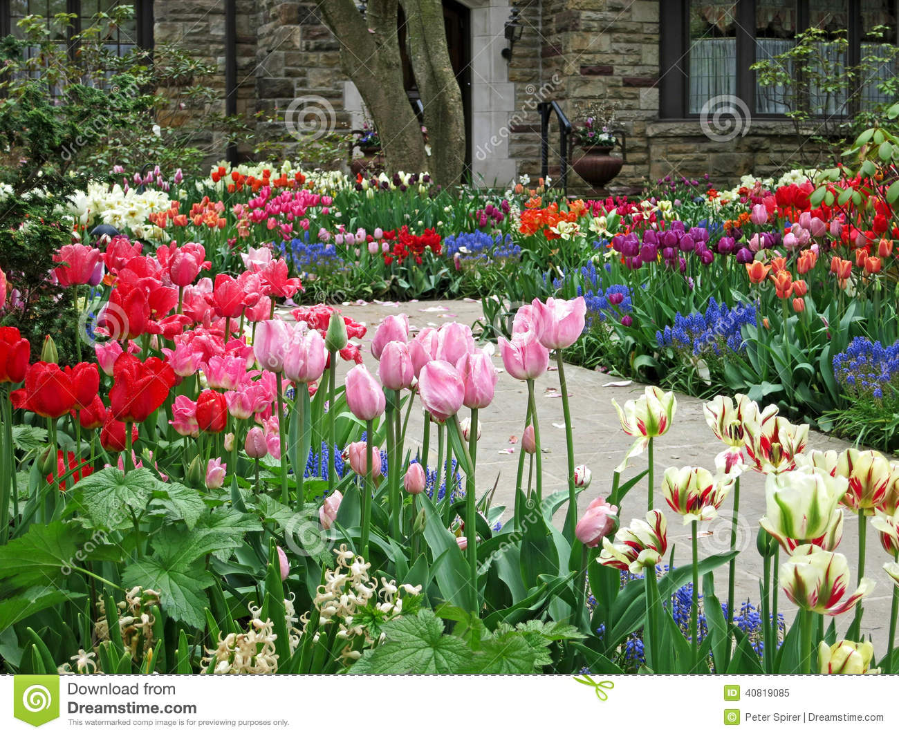 Front Yard Tulip Garden Stock Photos - Royalty Free Images