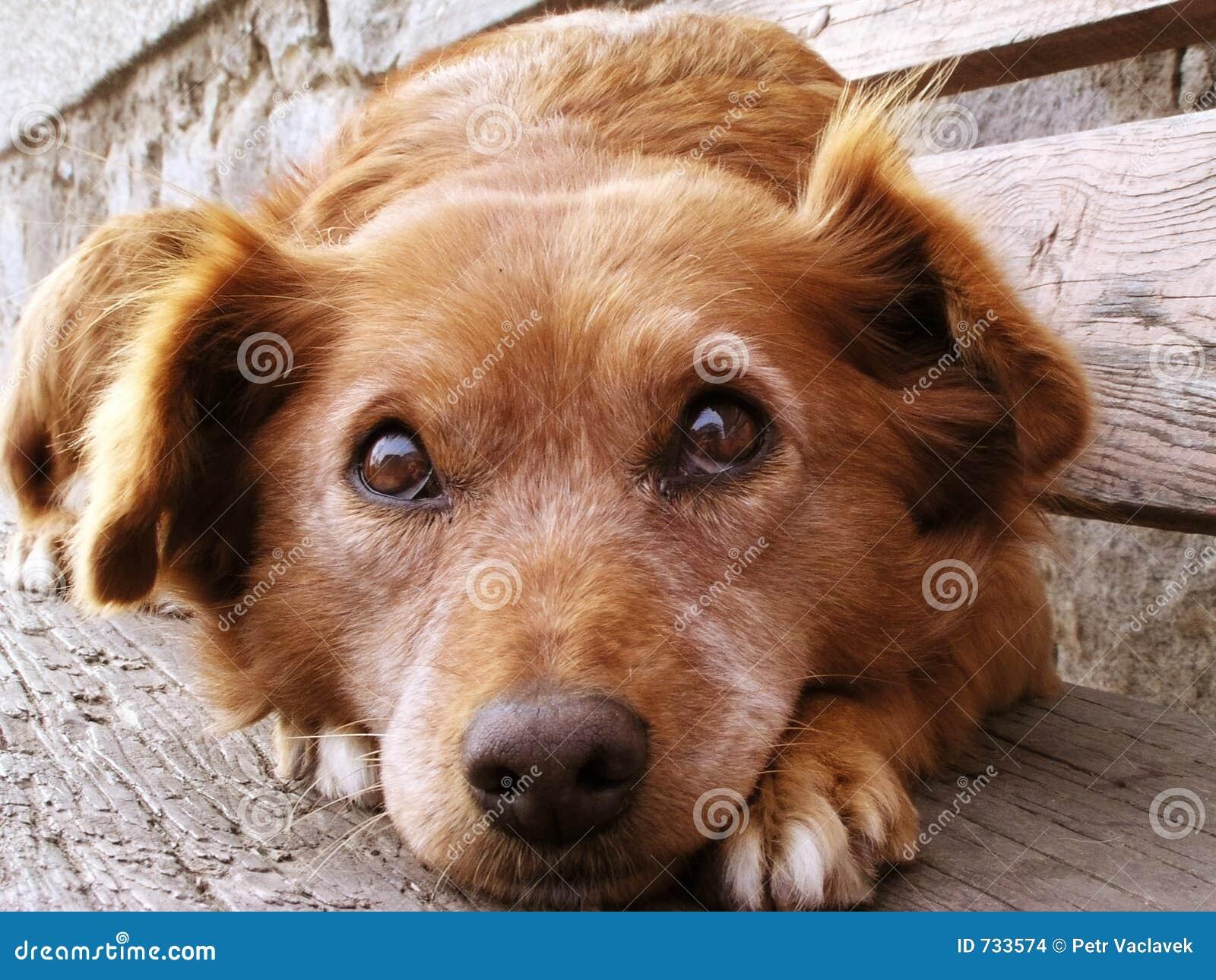 Fronte del cane