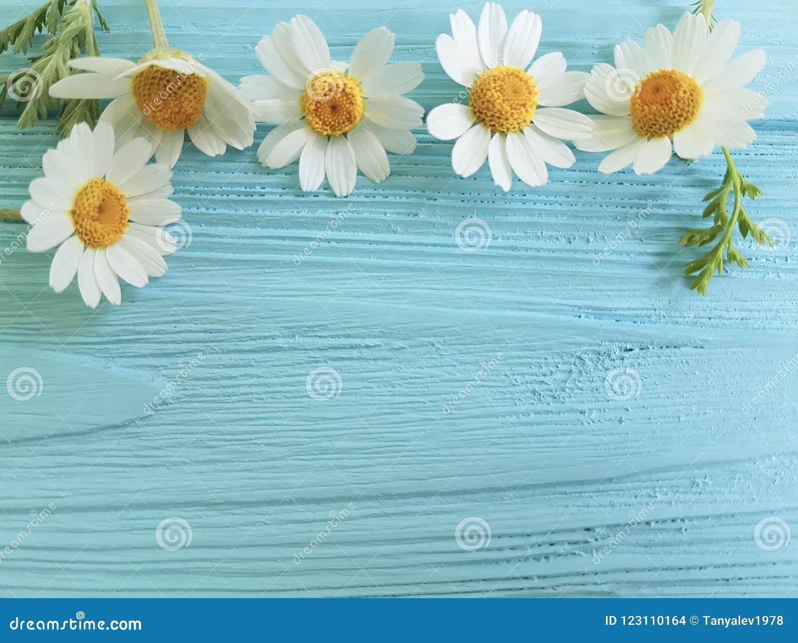 Frontera de la flor de la manzanilla en un ramo azul de la estación del fondo