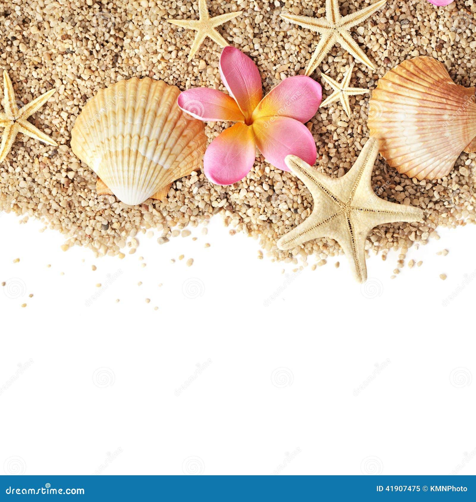 Frontera de las conchas marinas