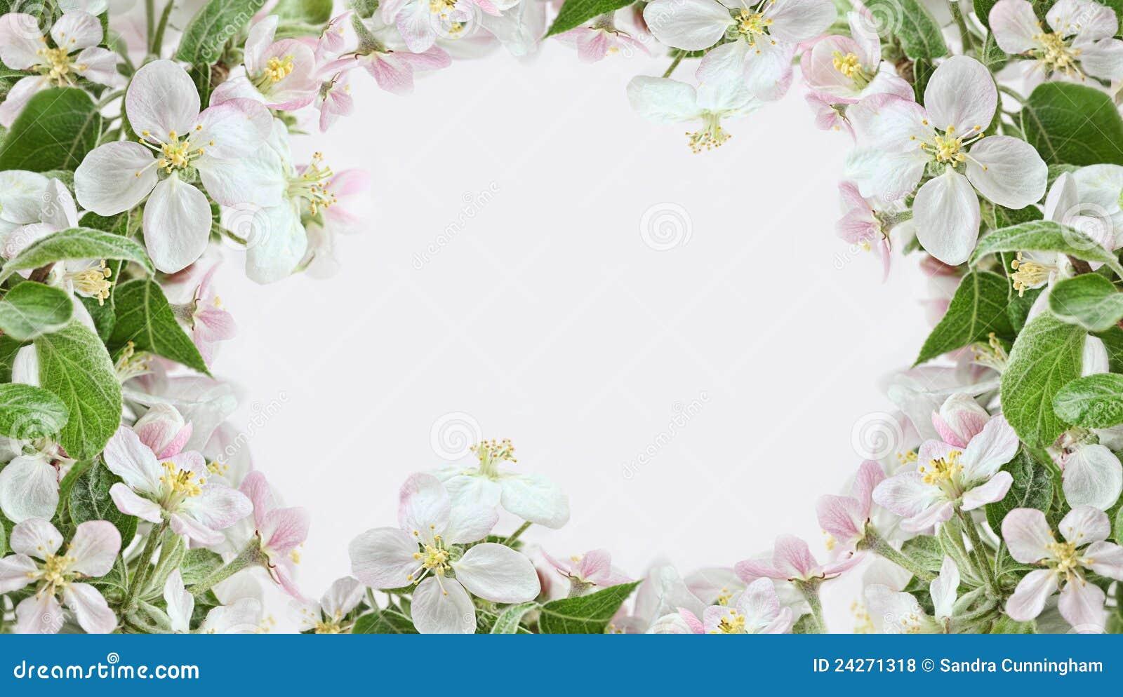 Fronteras del flor de Apple en fondo rosado
