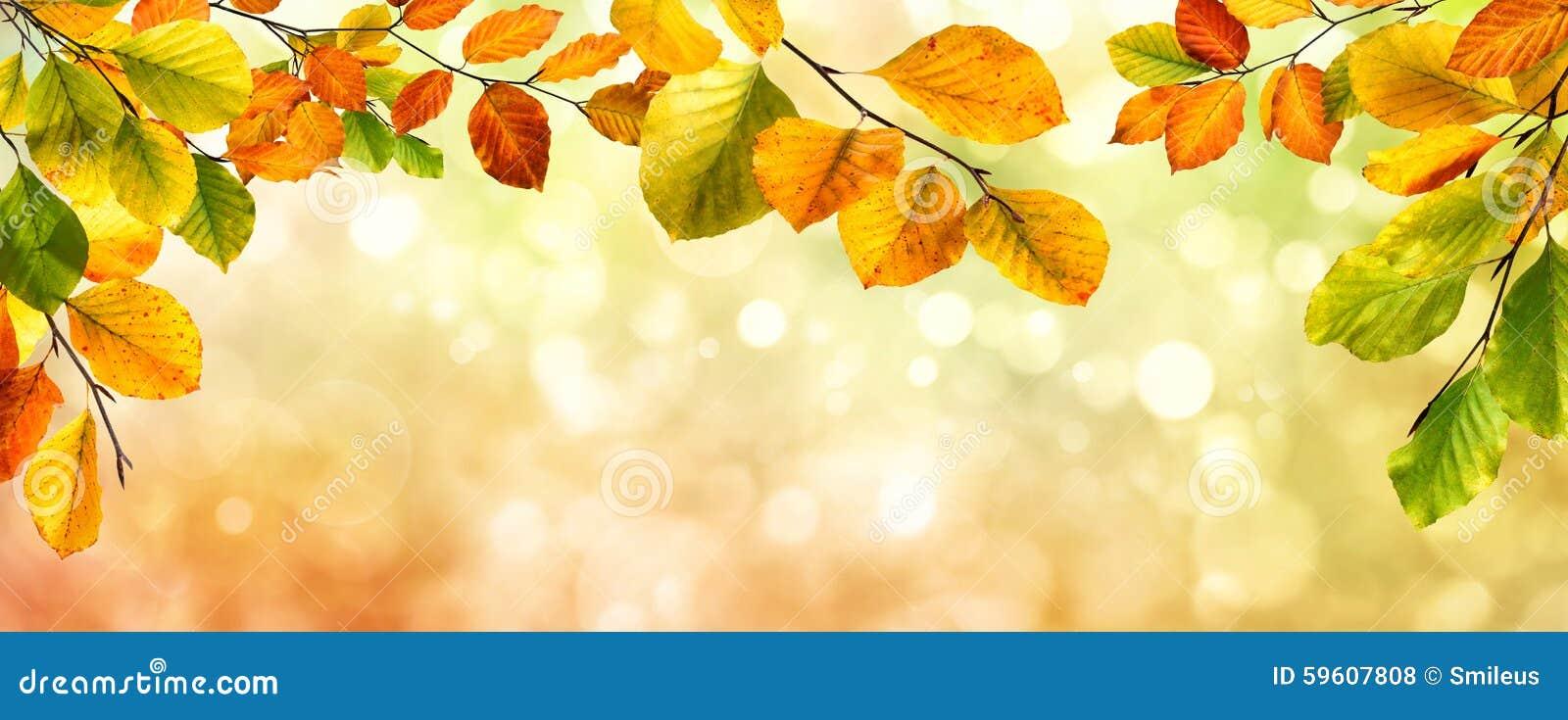 Frontière de feuilles d automne sur le fond de bokeh