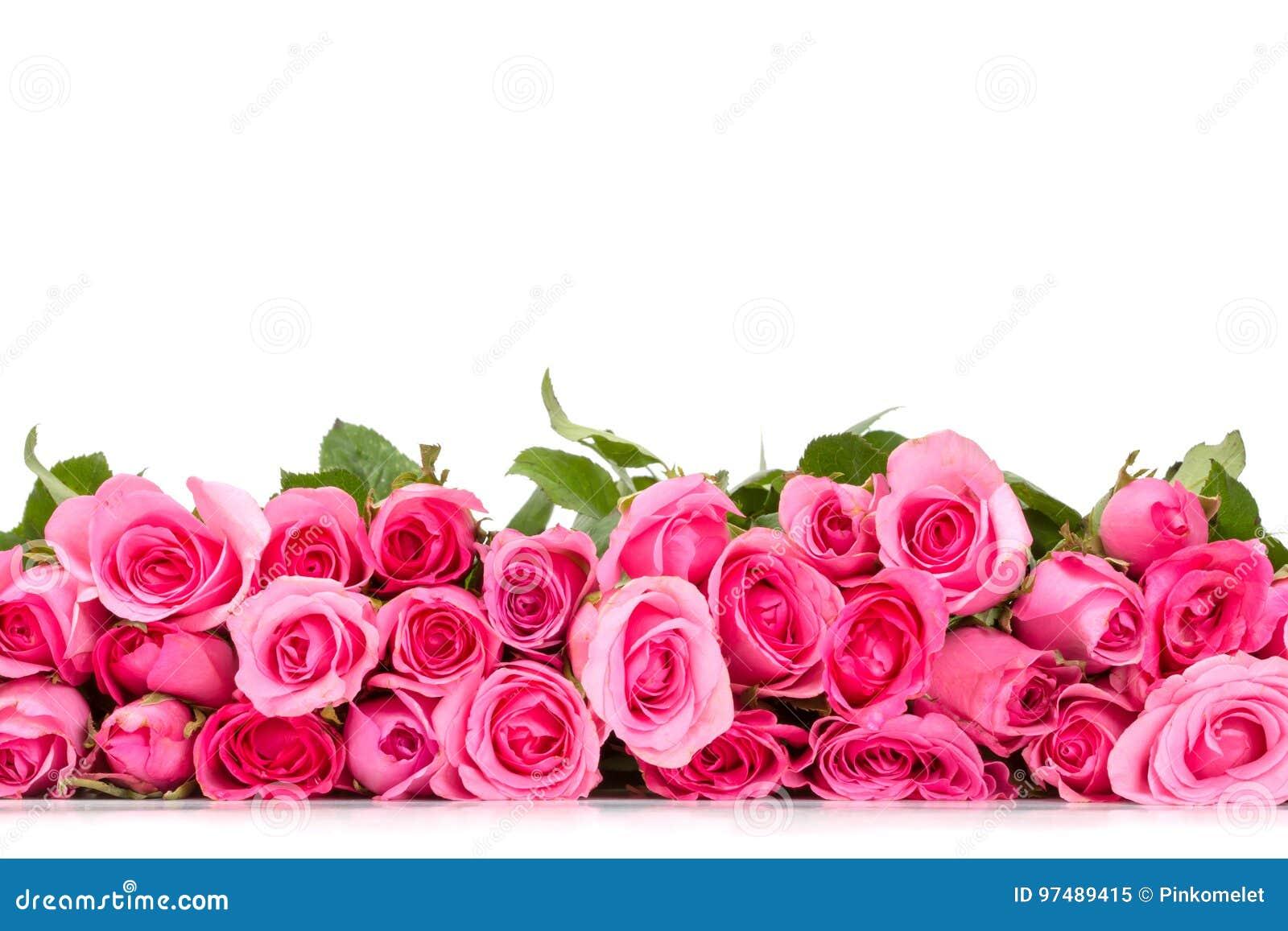 Frontière De La Belle Rose Douce Fraîche De Rose Pour L