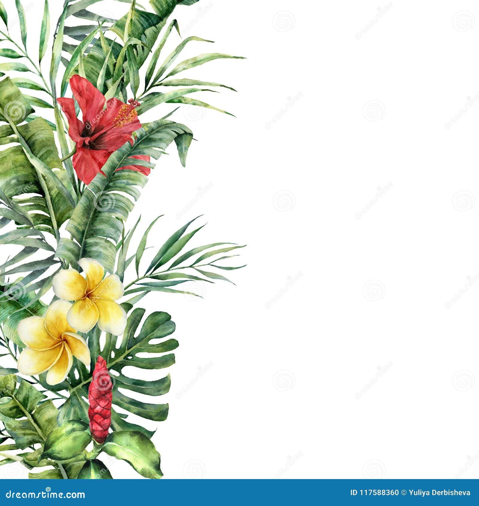 Frontière tropicale d aquarelle avec les feuilles et les fleurs exotiques Cadre peint à la main avec des palmettes, branches, mon