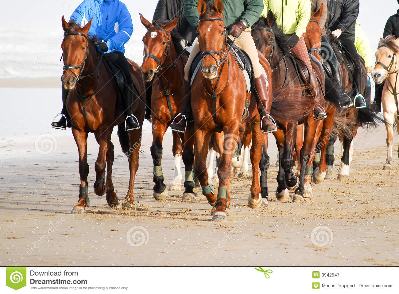 Frontview group horseback riding on the beach