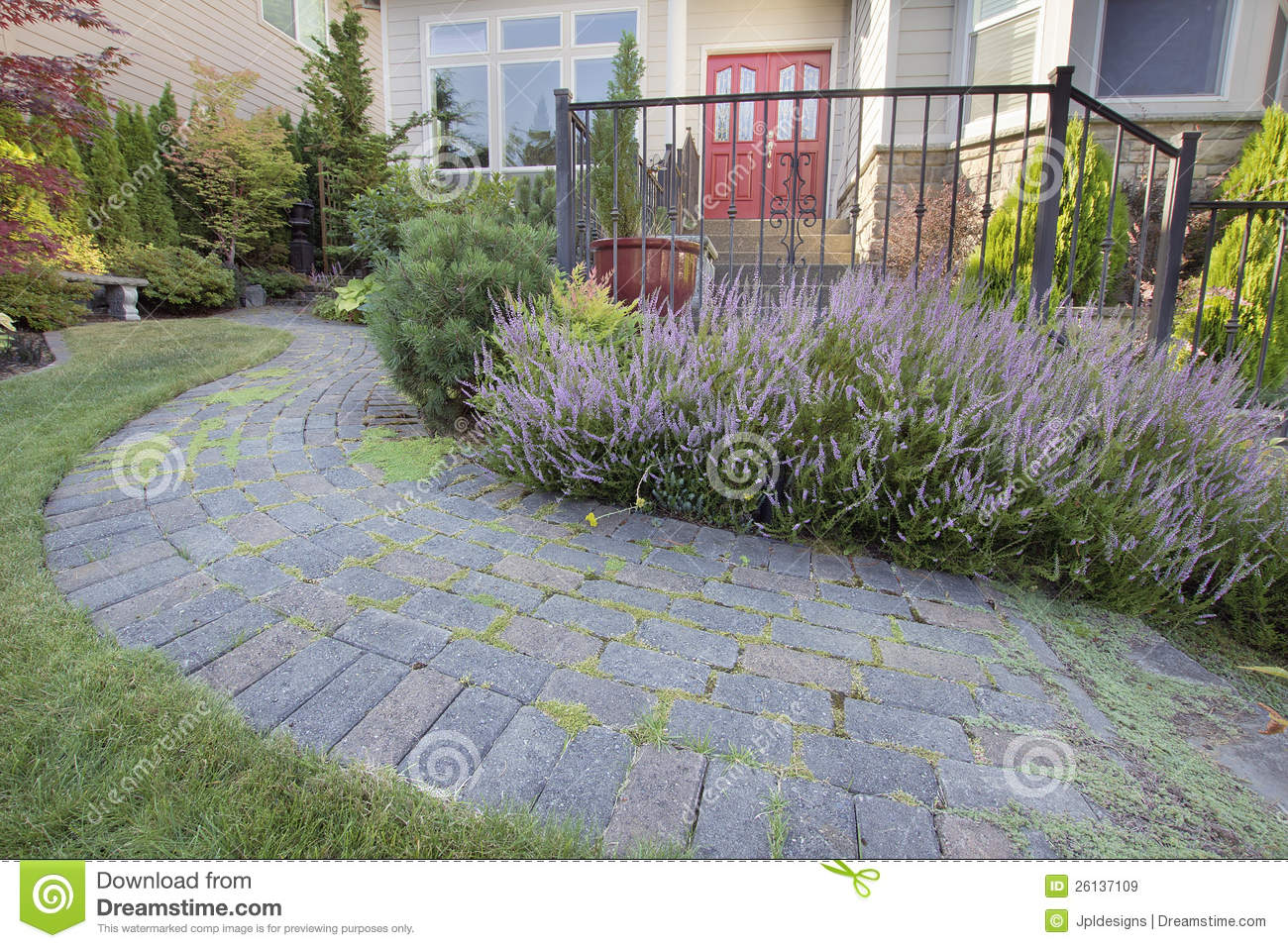 Frontyard Garden Paver Walkway With Heather Flower Royalty Free Stock Images Image 26137109