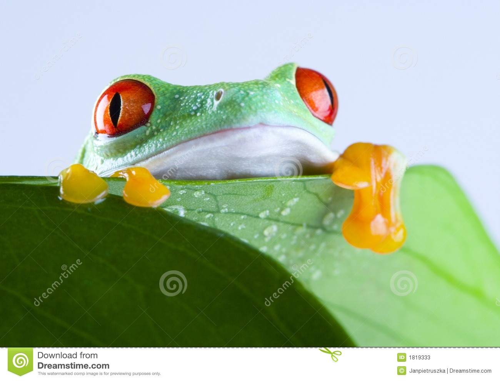 Atemberaubend Frosch Färbung Blatt Bilder - Framing Malvorlagen ...