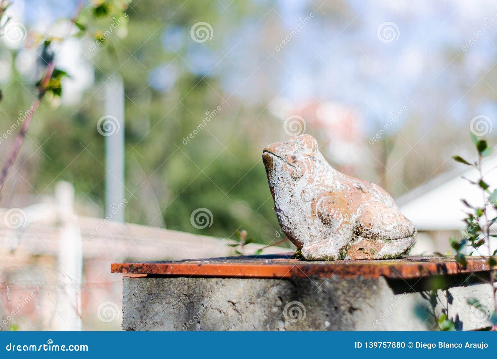 Frosch in der Sonne