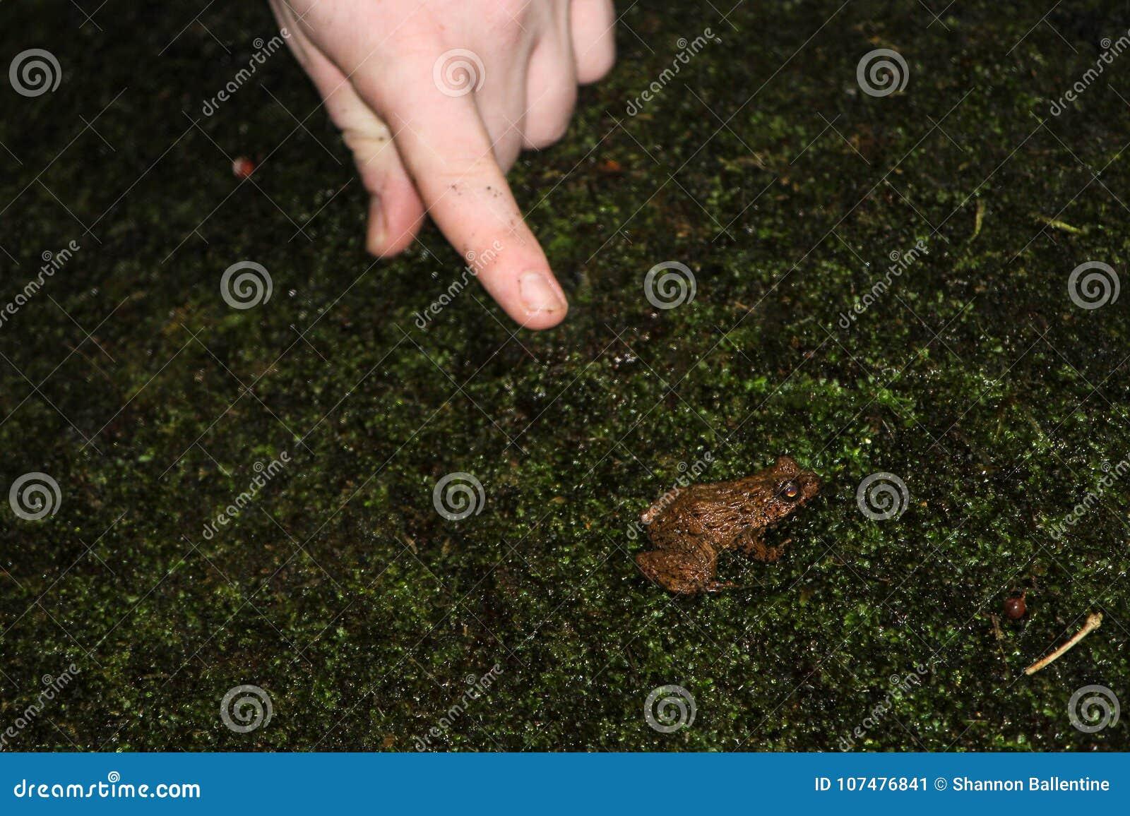 Frosch und eine Hand
