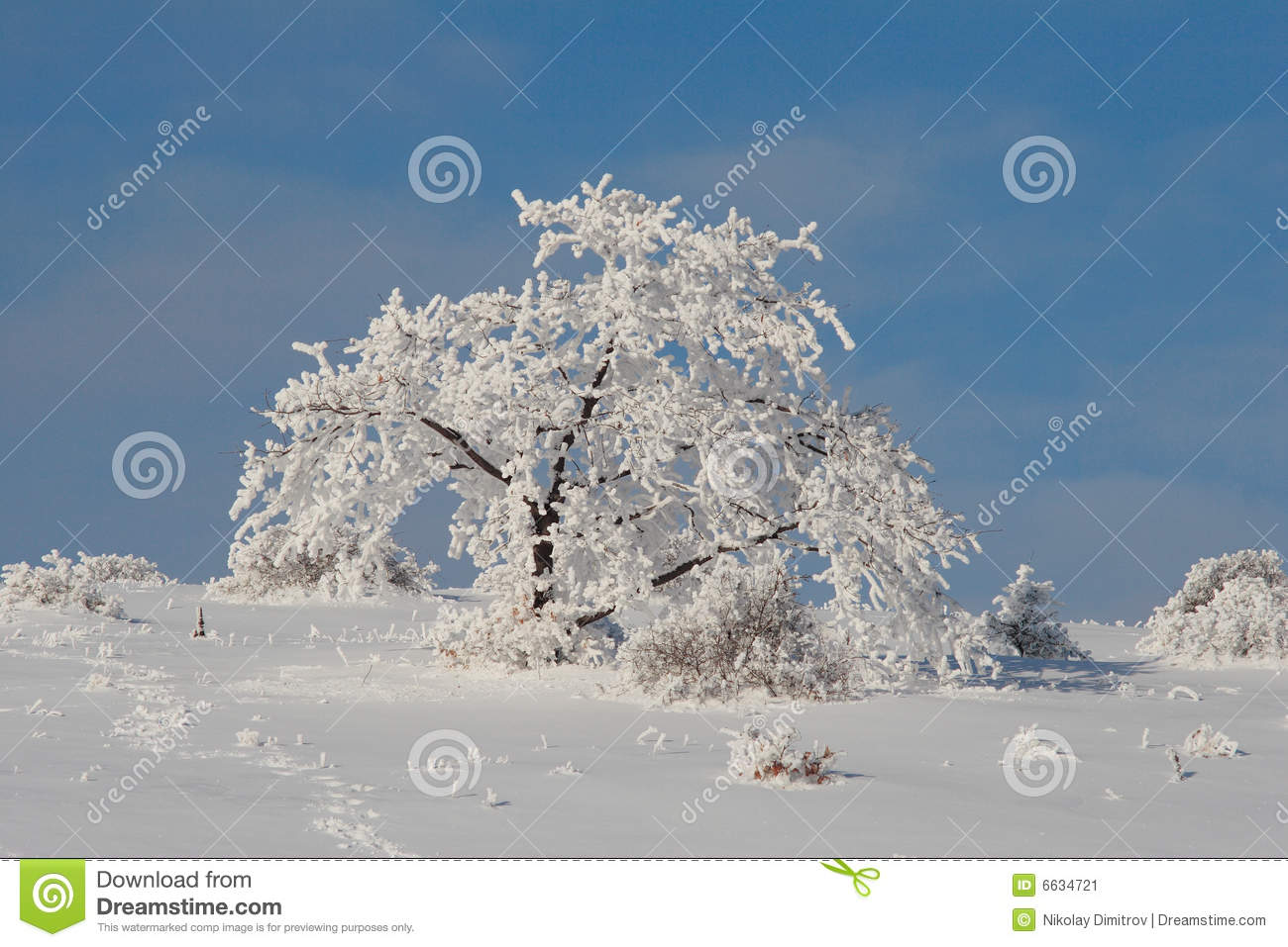 Christmas Tree Scenery Part - 42: Christmas Frost Scenery Snow Tree ...