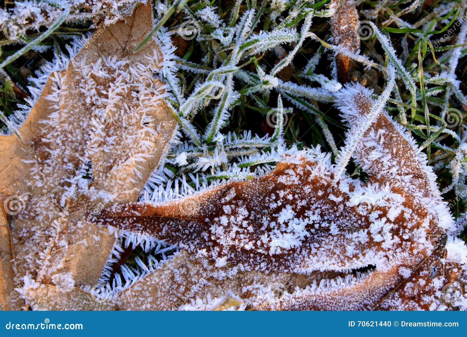 Frost покрыл листья зимы в траве
