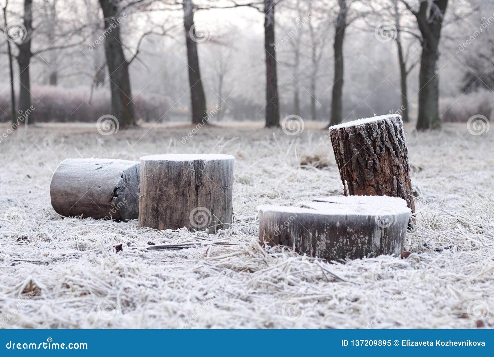 Frost auf den Stümpfen