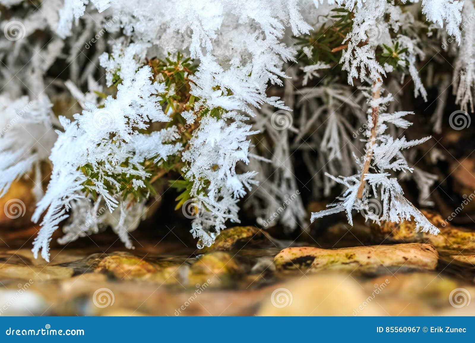 Frost auf Niederlassungen