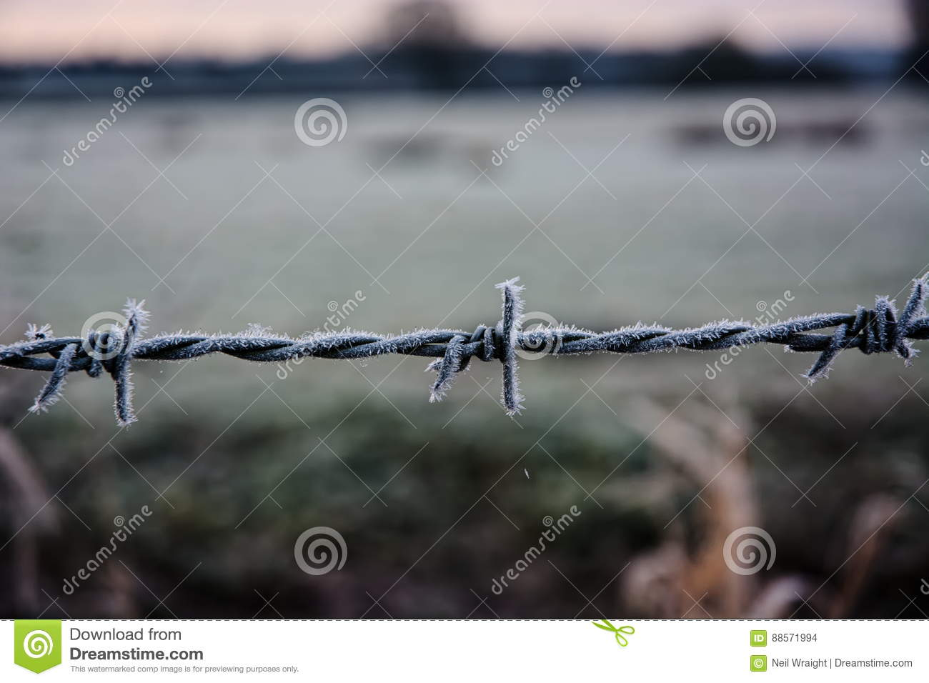 Frost on barbed wire. stock photo. Image of wire, business - 88571994