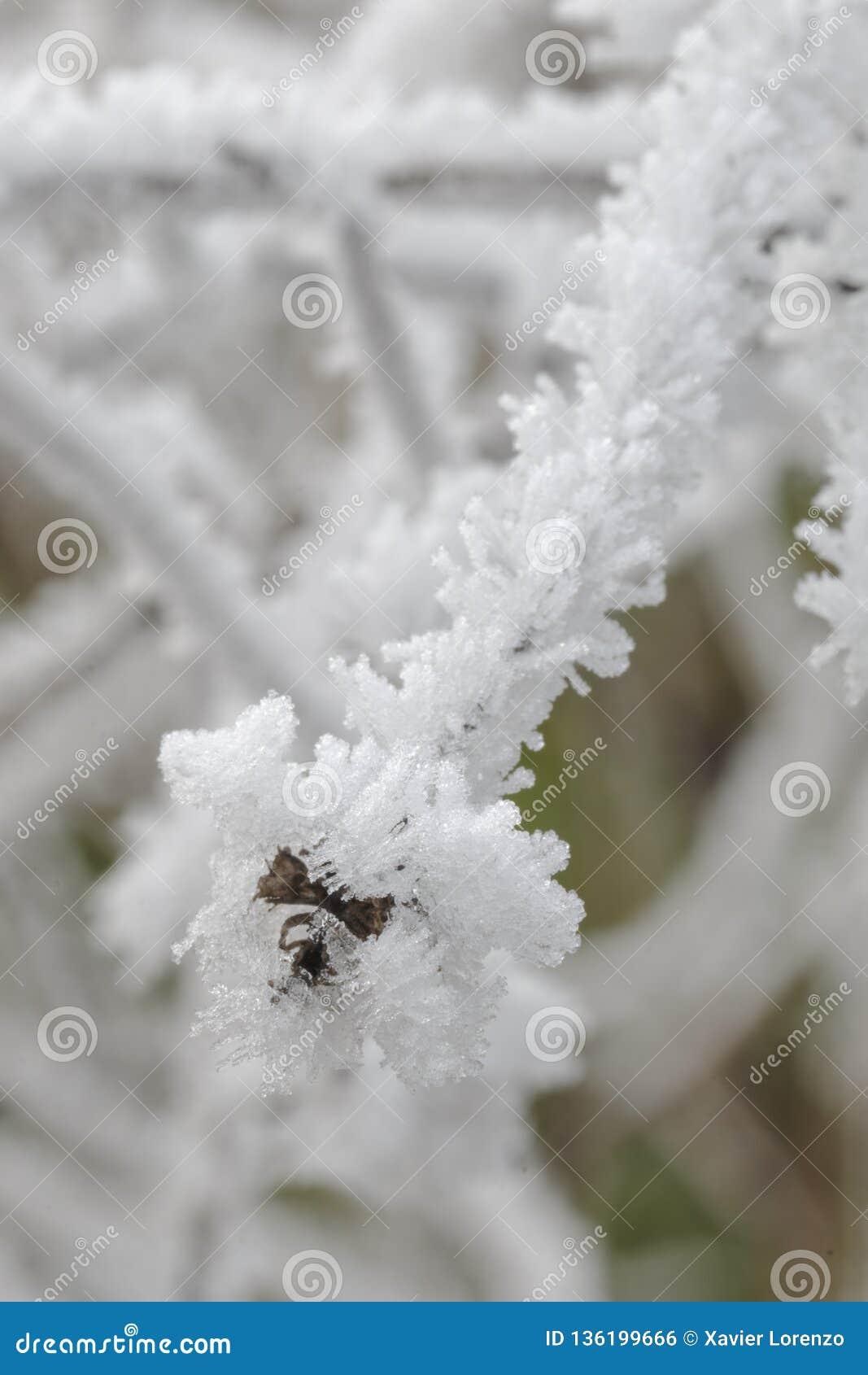 Frost a couvert des branches de buisson dans la campagne fond congelé