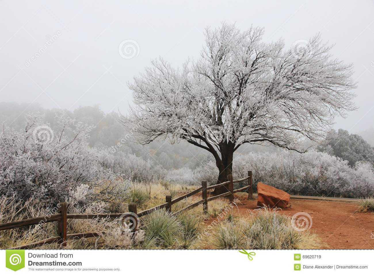 frost covered tree on foggy day stock photo image 69620719