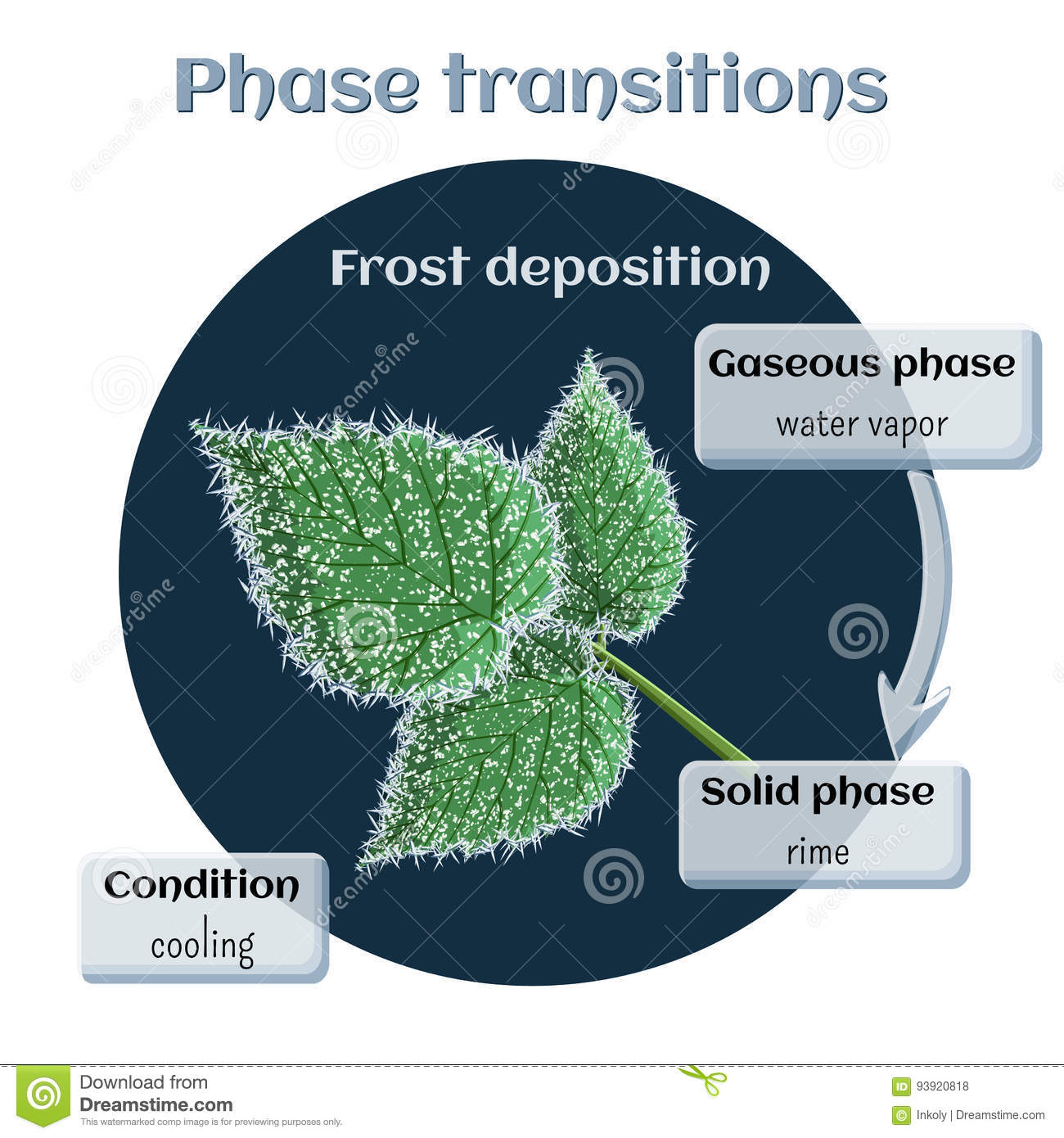 download frost deposition soft rime on raspberry leaves phase transition from gaseous to solid