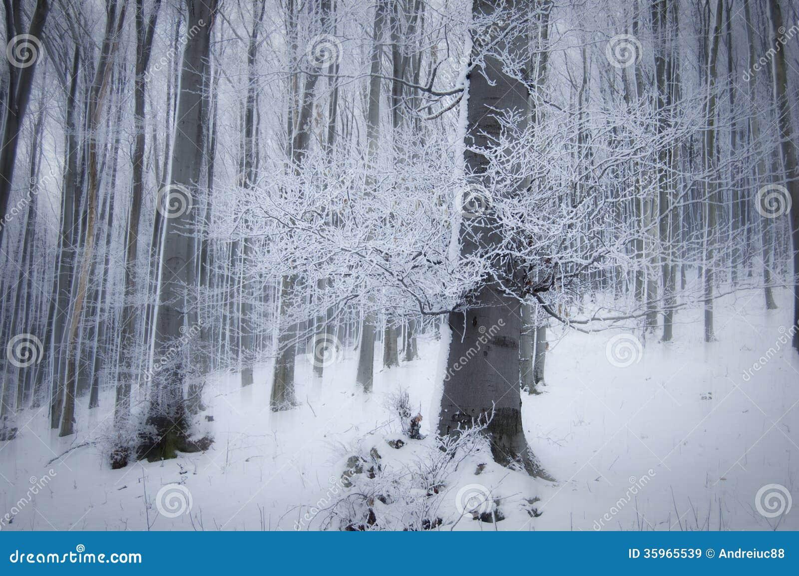 Frost en árboles en un bosque hermoso con niebla en invierno