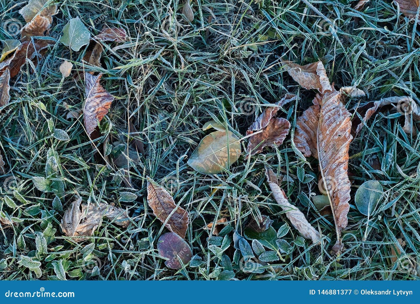 Frost en hierba y hojas secas