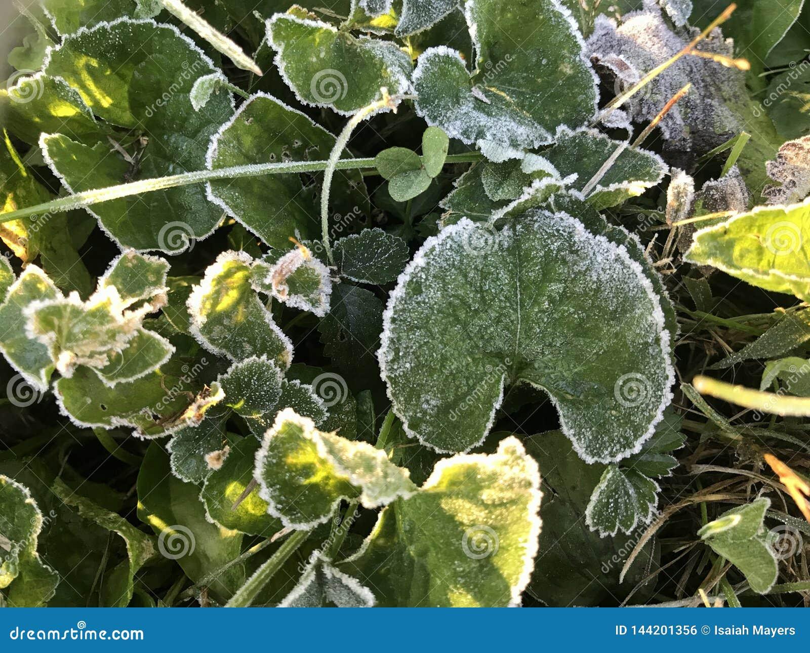 Frost est beau