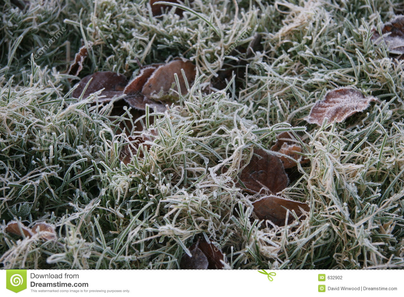 Frost on grass stock photo. Image of green, autumn, grass ...