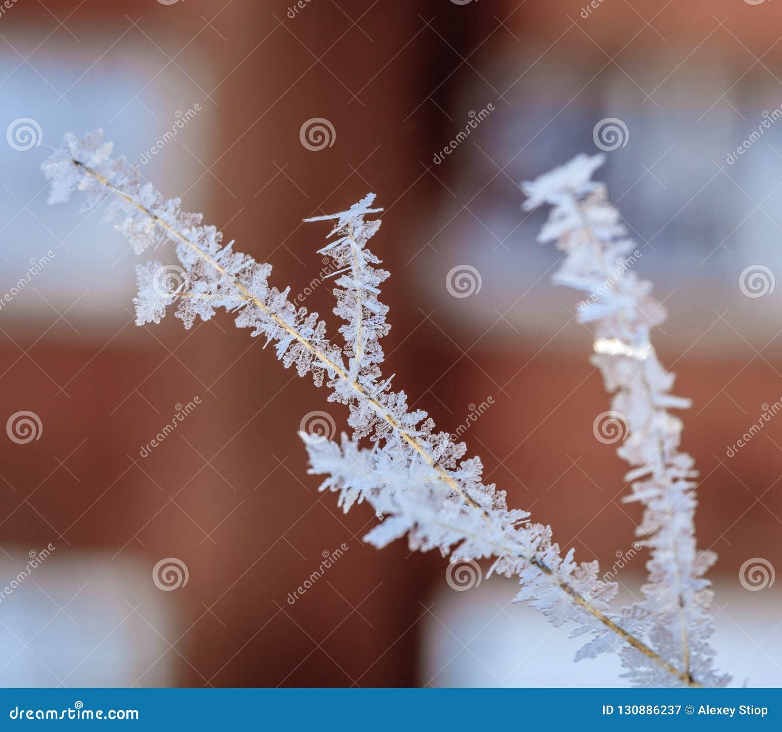 Frost-Kristalle