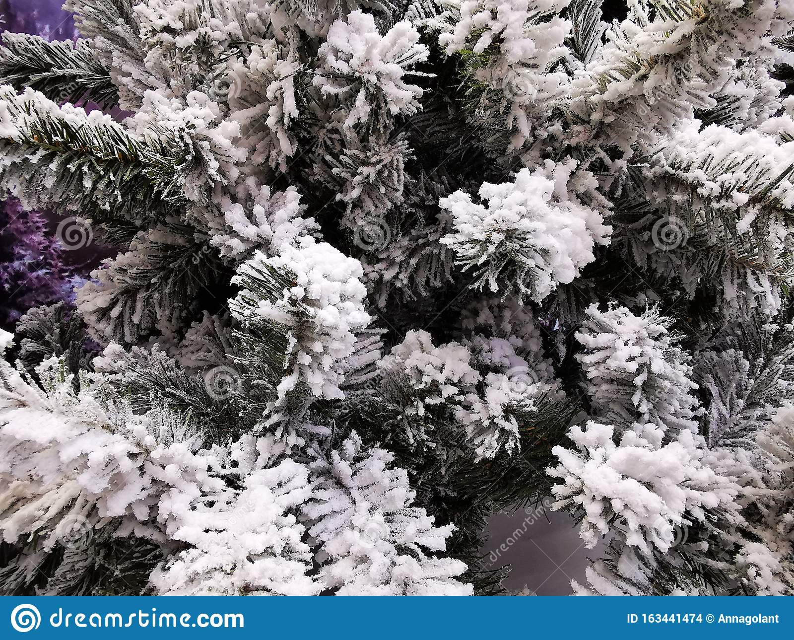 frost snow covered spruce branches beautiful winter backdrop christmas wallpaper card cover banner branch cold forest 163441474