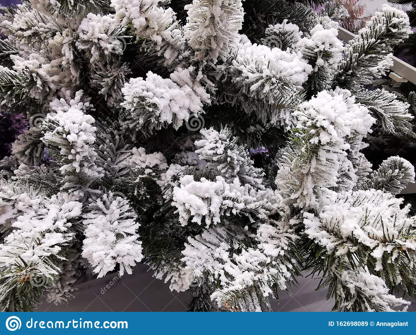 frost snow covered spruce branches beautiful winter backdrop christmas wallpaper card cover banner spruce branch cold forest 162698089
