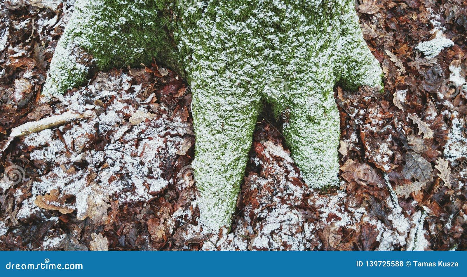 Frostat träd och sidor