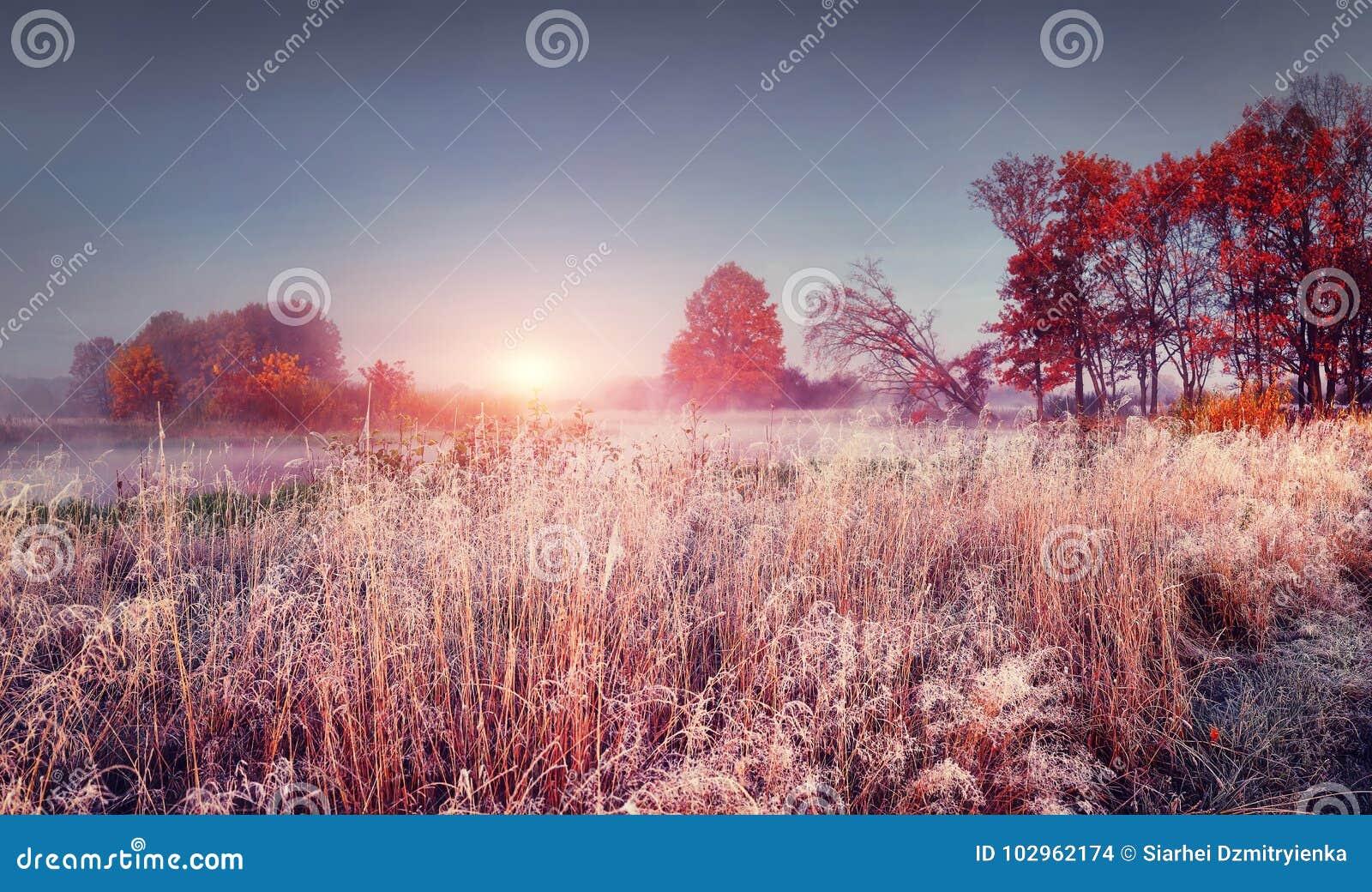 Frostigt höstlandskap av den november naturen på soluppgång Färgrik höst för landskap med rimfrost