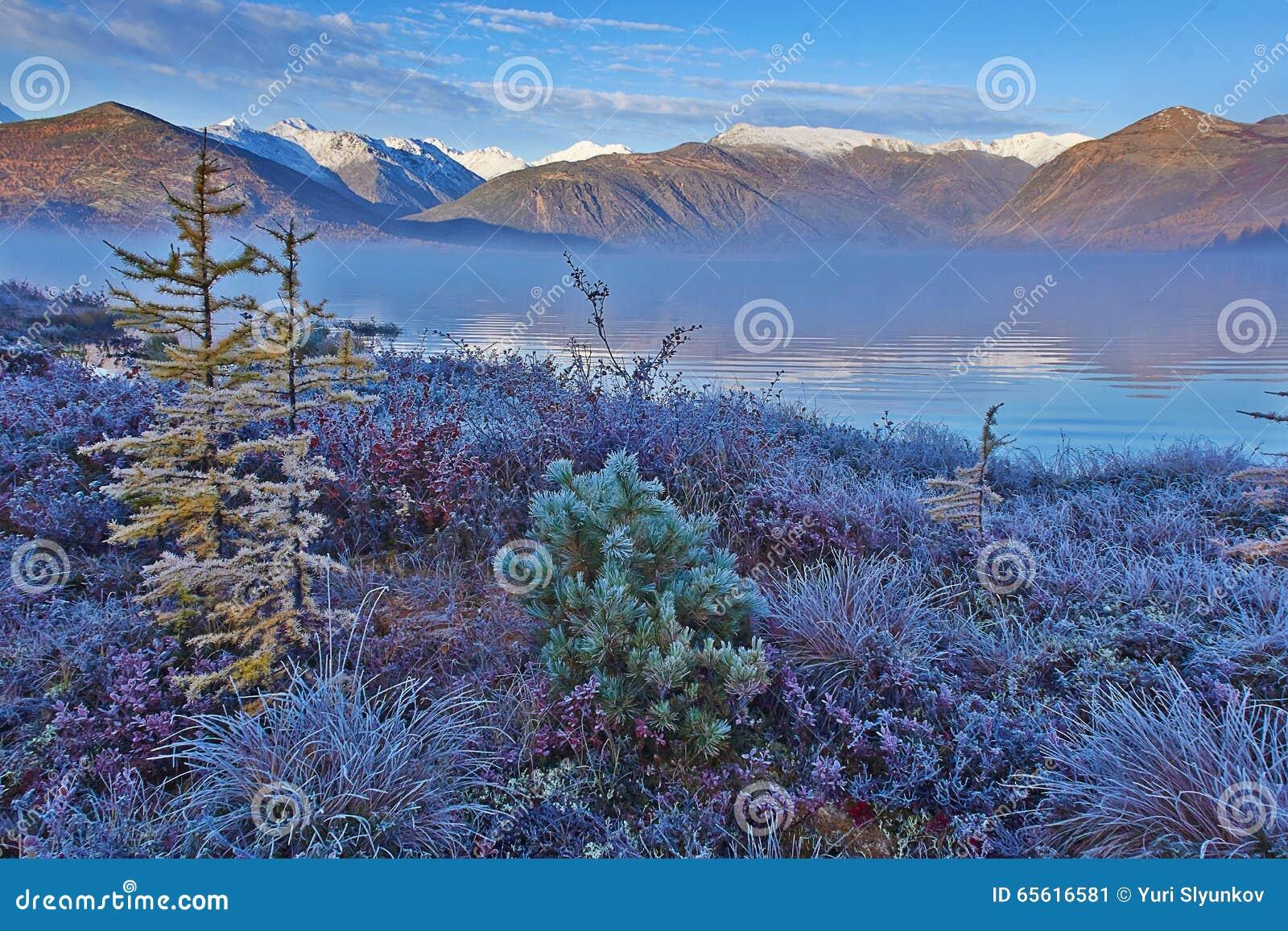 Frosty autumn dawn on Jack London s lake. A fog. Hoarfrost on plants. Kolyma