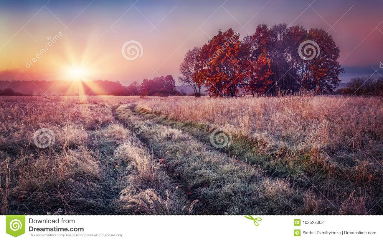 Frosty autumn landscape at sunrise on meadow. Colorful scenery autumn with hoarfrost on the grass and bright sun on horizon. Fall